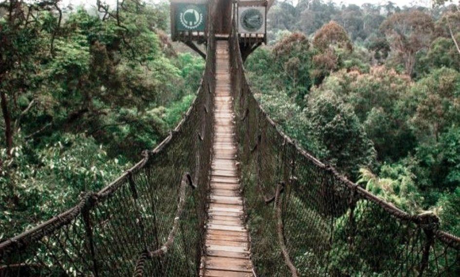 Canopy Bridge Bungkit Bengkirai