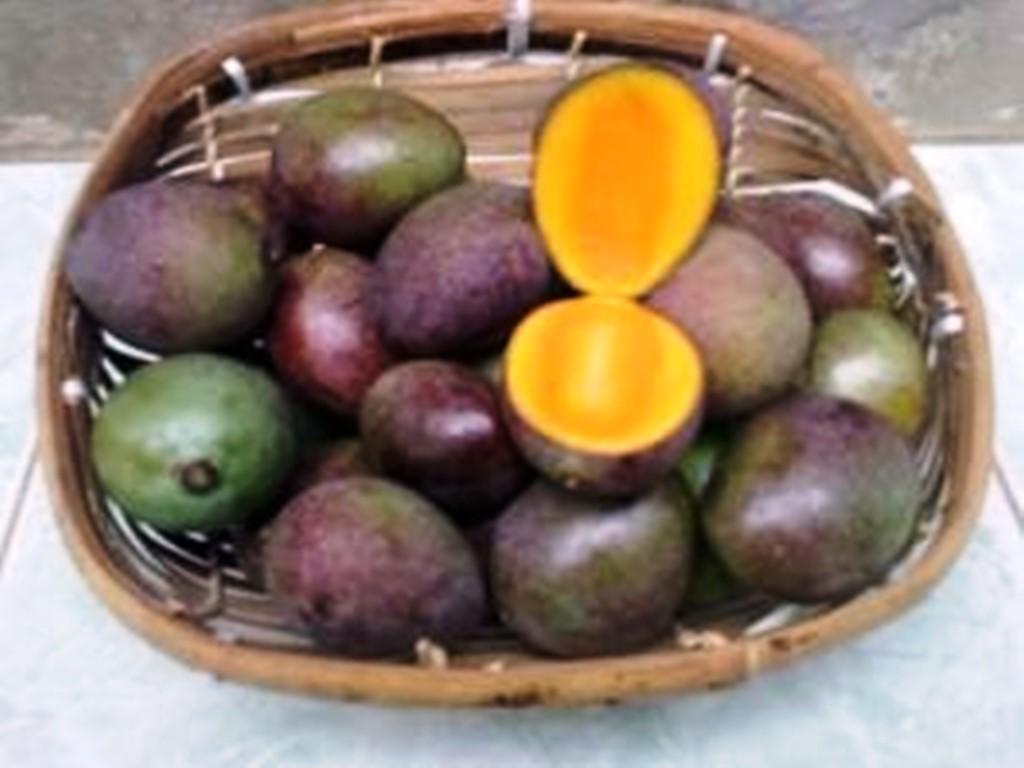 Poh Bolong