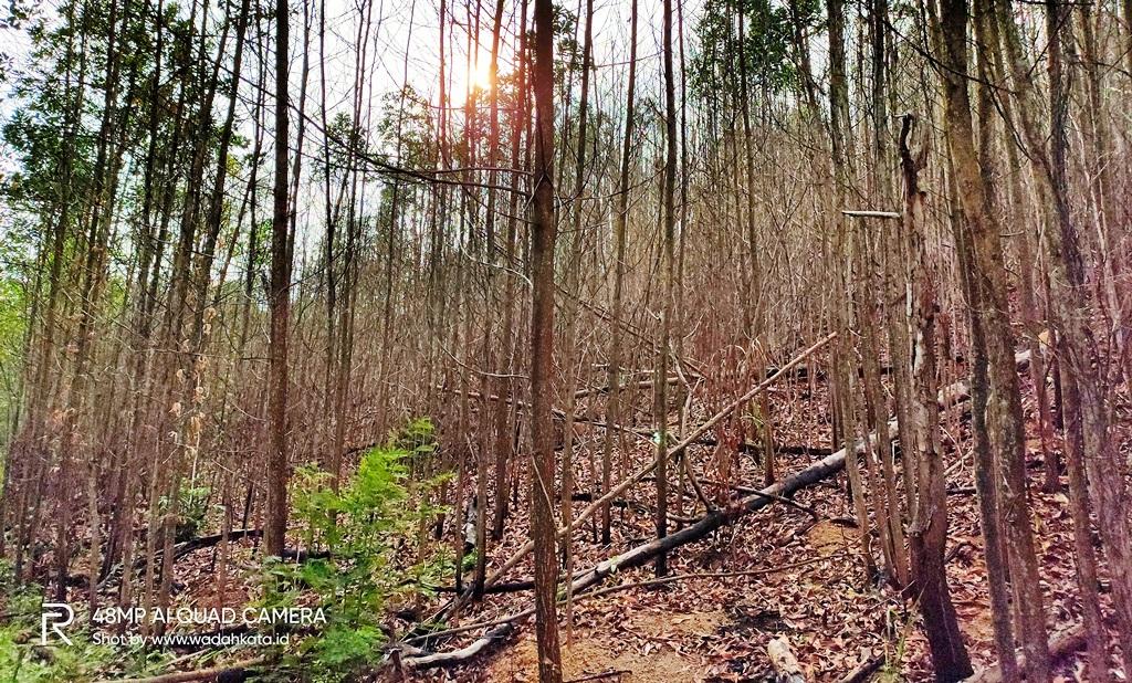 Bukit suharto yang perlu uluran tangan model sustainable investing