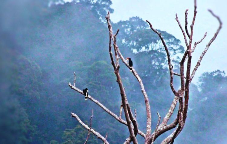 Burung rongkang khas Kalimantan, yang merindukan sustainable investing