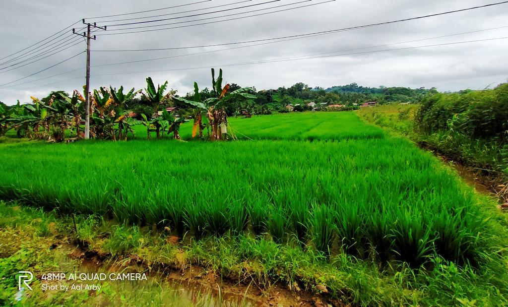 Desa Loa Ulung, Kukar, Kaltim yang masih asri dengan kegiatan usaha pertanian yang didukung oleh peran air permukaan dari sungai Mahakam I Dokumentasi pribadi