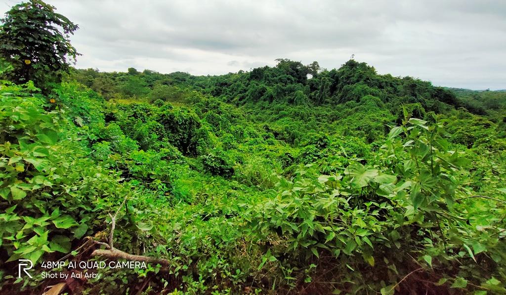 Hamparan alas rimba Kaltim, yang bisa dinikmati di jalur darat Kabupaten Kukar- Kota Samarinda I Dokumentasi  Pribadi